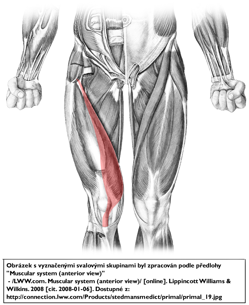 PostView additionally 655766395711441380 besides 1096764 as well 4838589 further The Knee Joint. on vastus lateralis origin