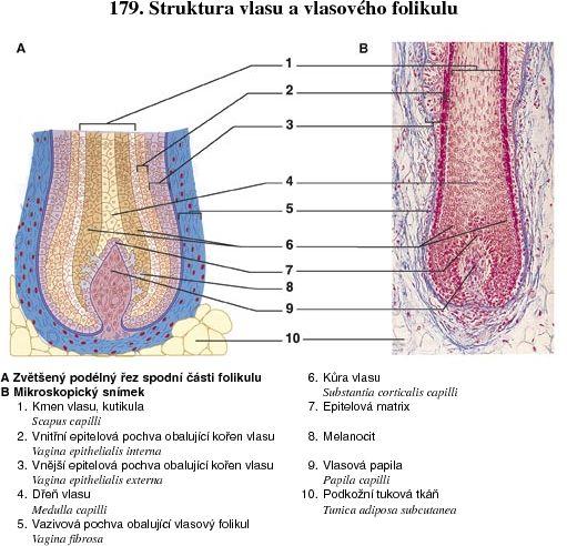 vlhká tuková vagina