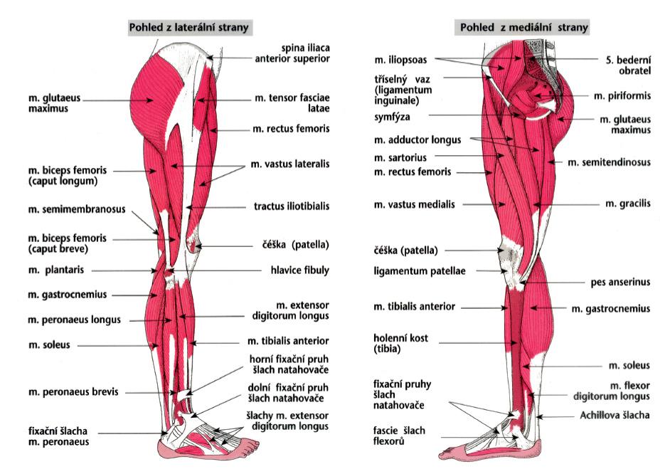 5 nemocí, které způsobují bolesti kloubů