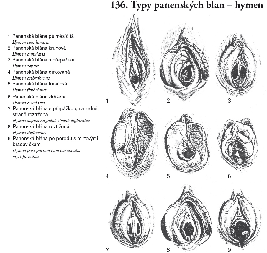 obrázky malých vagíny