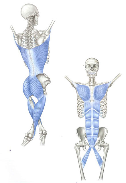 myofascial meridians for manual and movement therapists
