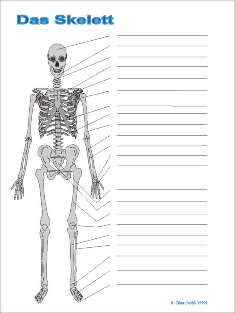 Schön Fakten über Das Skelettsystem Bilder - Anatomie Ideen ...